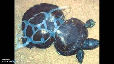 Plastic Turtle Trap_maxresdefault