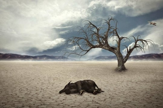 mass-extinction-worse-than-thought-study-drought-1-889x593