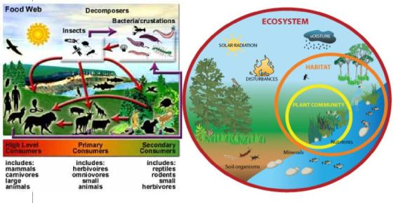 ecological-community-18